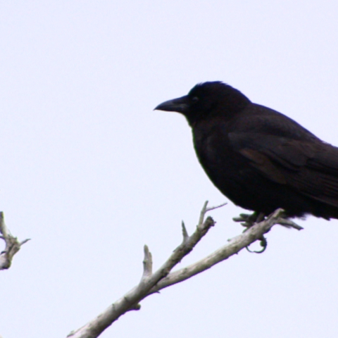 the killers music video crow
